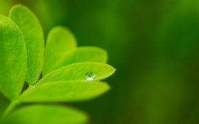 Picture greens, macro, nature, background, Wallpaper, drop, plants, leaf