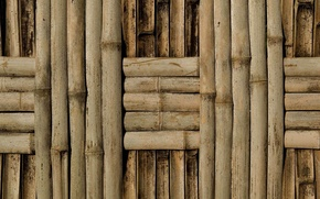 Picture wall, pattern, bamboo