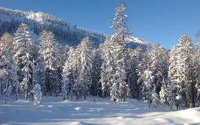 Picture winter, forest, snow, trees, landscape, nature, photo, mountain, Far East