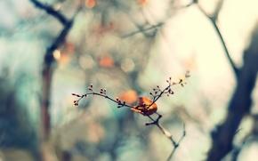 Wallpaper focus, nature, leaf, leaf, blur, bokeh, sprig, spring