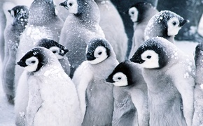 Picture penguins, Baby, Penguins, snow