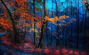 Picture road, autumn, foliage