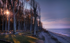 Picture trees, shore, morning