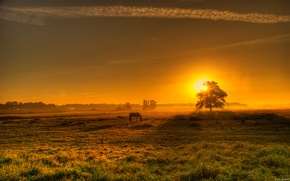 Picture field, sunset, horse