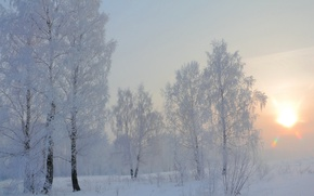 Picture winter, snow, morning, birch