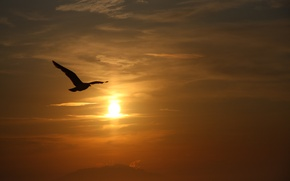 Picture the sky, the sun, clouds, bird