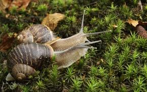 Picture moss, snails, pair, horns