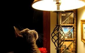 Wallpaper Lamp, photo, interest, look