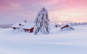 Picture winter, the sun, home, spruce, Snow, Norway