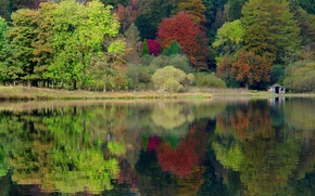 Picture autumn, forest, trees, nature, lake, England, UK, England, United Kingdom, caeciliametella Photography, Grasmere