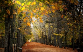 Picture autumn, the city, street