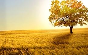 Picture forest, nature, landscapes