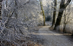 Picture frost, forest, Winter, path
