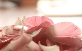 Picture light, flowers, petals, pink