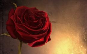 Wallpaper macro, art, wall, red, flower, rose, glow, fire