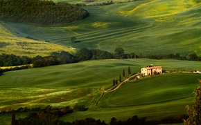 Picture greens, trees, field, Tuscany