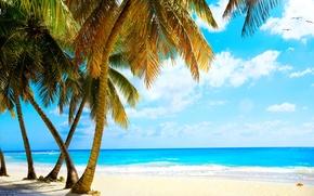Picture sand, sea, beach, tropics, palm trees, shore, summer, beach, sea, ocean, paradise, vacation, palms, tropical