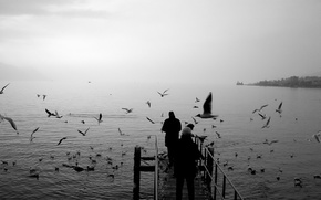 Picture seagulls, black and white, pier