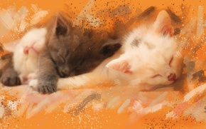 Picture grey, picture, divorce, watercolor, kittens, white, strokes, sleep, Wallpaper from lolita777