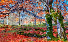 Picture autumn, forest, leaves, trees, moss, slope