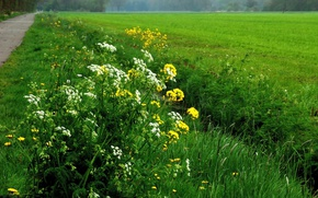Picture Greens, Flowers, Nature, Field, Grass, Spring, Track, Flowers, Spring, Green field, Path