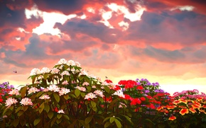 Picture the sky, clouds, butterfly, flowers, glow, colorful, Phlox