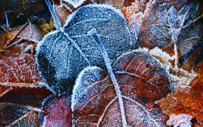Picture BACKGROUND, ICE, LEAVES, LEAF, YELLOW, AUTUMN, FOLIAGE, FROST