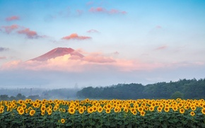 Picture field, forest, the sky, sunflowers, landscape, mountain
