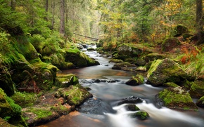 Picture forest, trees, landscape, river, stones, stream