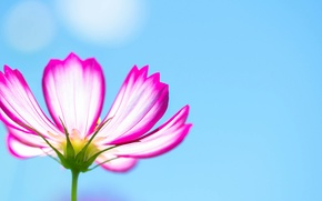 Picture flower, the sky, petals, stem