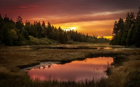 Picture forest, landscape, sunset, lake