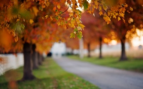 Picture leaves, beauty, widescreen, blur, leaves, HD wallpapers, Wallpaper, leaves, leaves, tree, trees, greens, full screen, ...