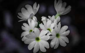Picture macro, plant, petals, inflorescence