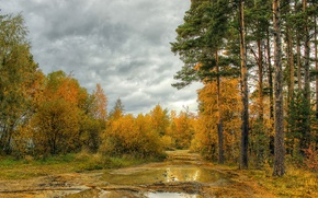 Picture autumn, forest, the sky, trees, forest, sky, autumn