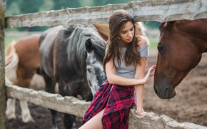 Picture girl, hand, horse, touch