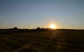Picture field, the sun, rays, sunset, the evening
