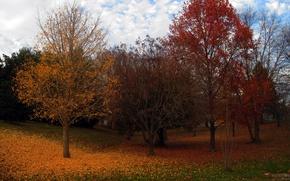 Picture autumn, trees, foliage, colors, trees, leaves, Autumn fall