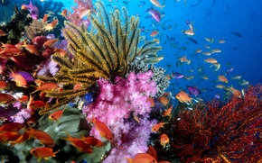 Picture fish, corals, reef