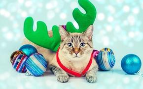 Wallpaper cat, cat, balls, toys, horns