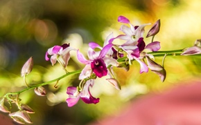 Picture macro, flowers, blur, orchids, colorful, Wallpaper from lolita777