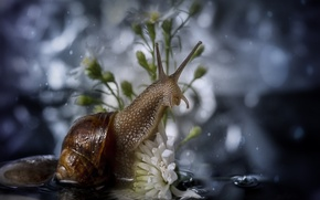 Picture macro, flowers, snail, bokeh