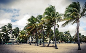 Picture palm trees, florida, Park, street, USA, art, Deco, buidling, deco, beach, sand, art, Palma, sky, ...