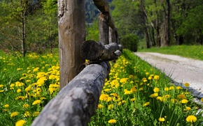 Picture road, forest, grass, trees, flowers, nature, Park, spring, grass, forest, road, trees, nature, park, flowers, ...