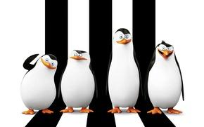 Picture cartoon, Rico, Skipper, Kowalski, Classified, Corporal, Penguins of Madagascar, Kowalski, The Penguins Of Madagascar, Prapor, …