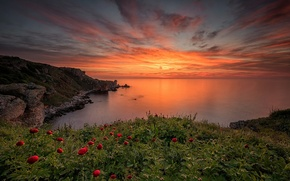 Picture sea, the sky, clouds, landscape, sunset, flowers, nature
