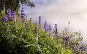 Picture landscape, flowers, nature, fog, lake
