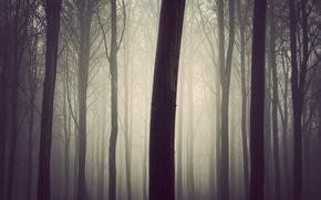 Wallpaper tree, fog, forest