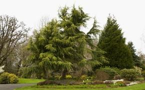 Picture trees, Park, stones, lawn, garden, USA, the bushes, Oregon Gardens, Silverton