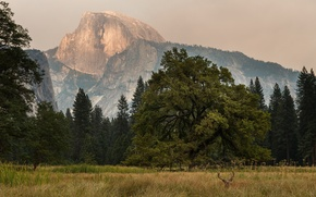 Picture trees, Yosemite, mountains, sunrise, deer, Half Dome