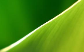 Wallpaper edge, sheet, green, strip